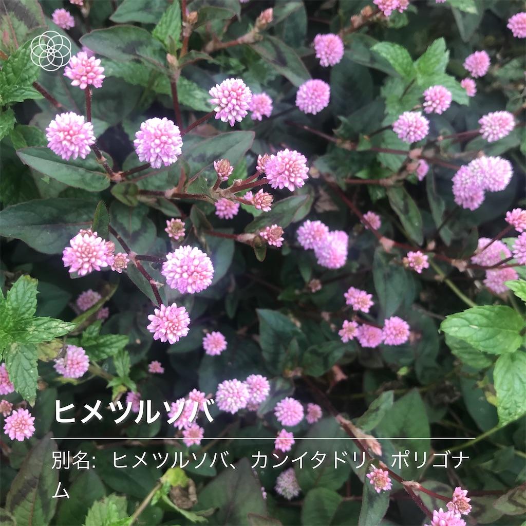 f:id:wakuwakushincha:20201124222120j:image