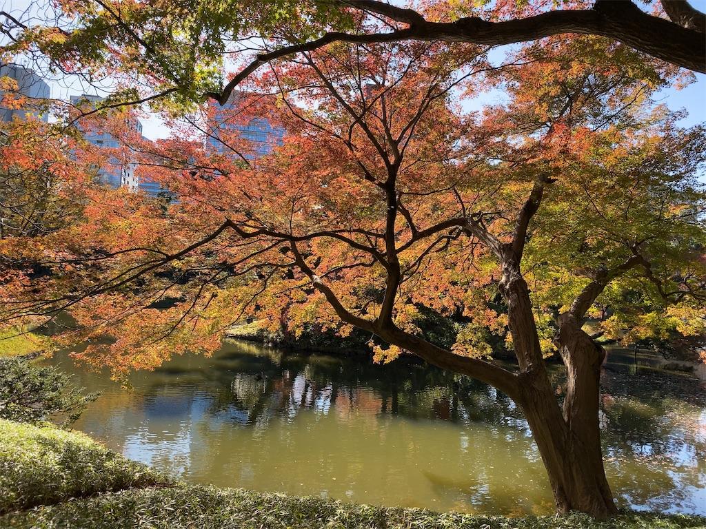f:id:wakuwakushincha:20201128173352j:image