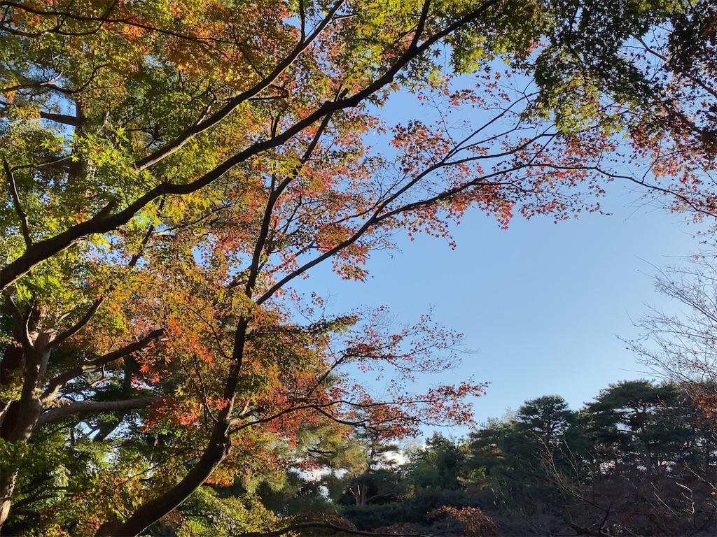 f:id:wakuwakushincha:20201128204417j:image
