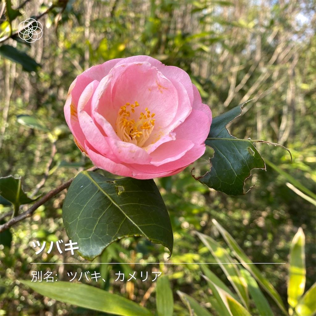 f:id:wakuwakushincha:20210208230503j:image