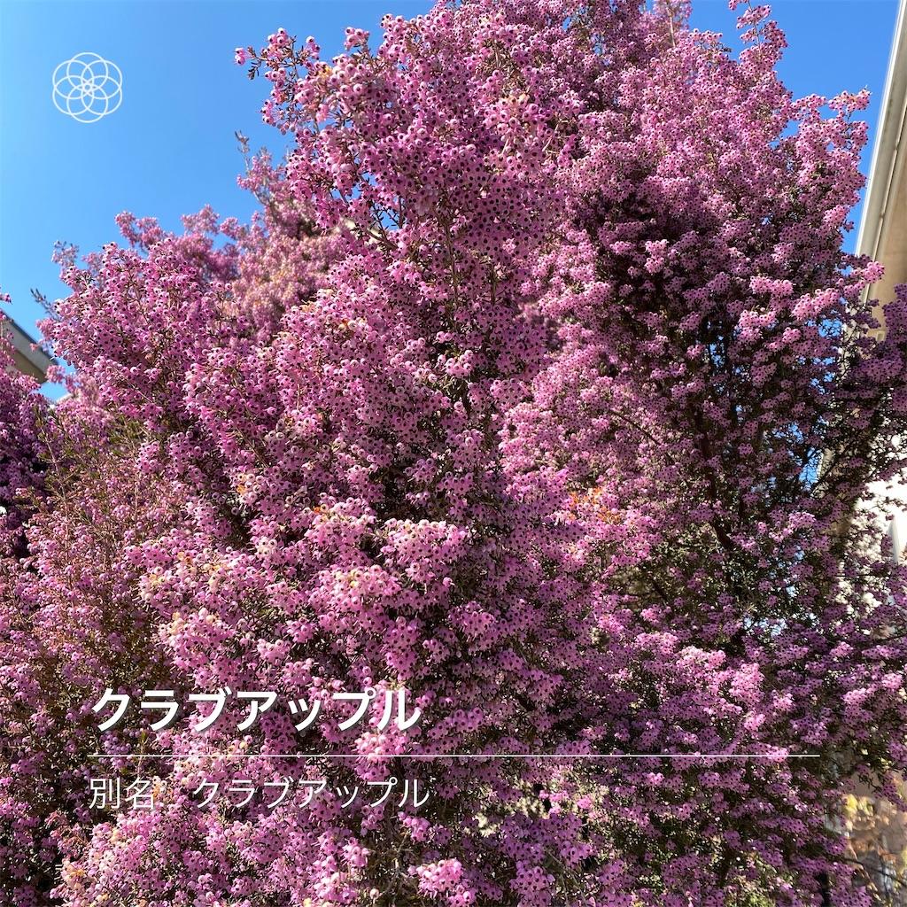 f:id:wakuwakushincha:20210209210546j:image