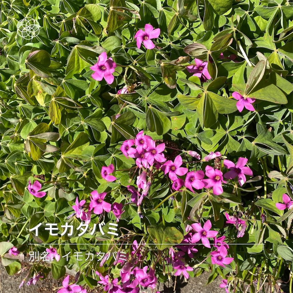 f:id:wakuwakushincha:20210223090822j:image