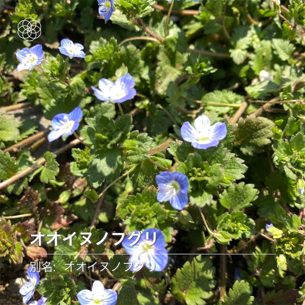 f:id:wakuwakushincha:20210223090826j:image