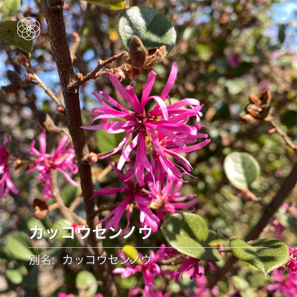 f:id:wakuwakushincha:20210223090837j:image