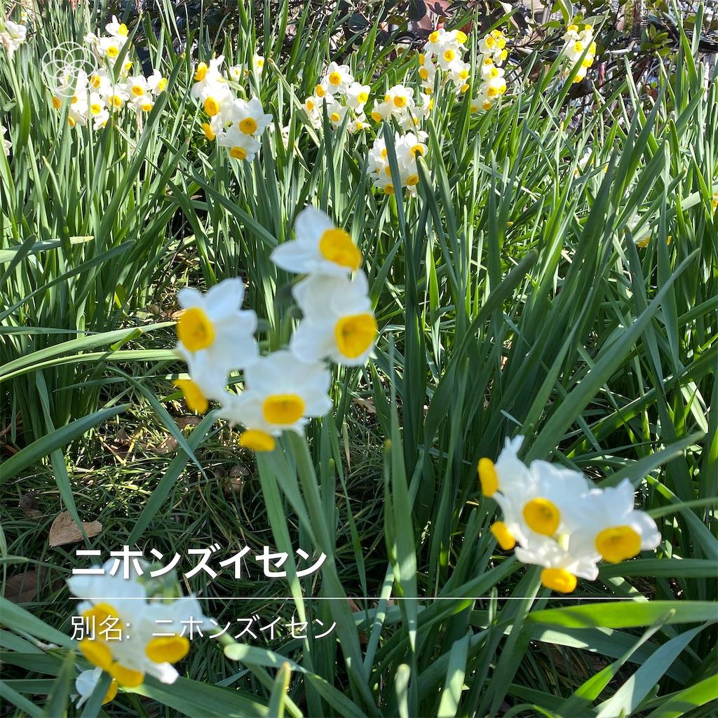 f:id:wakuwakushincha:20210223161725j:image