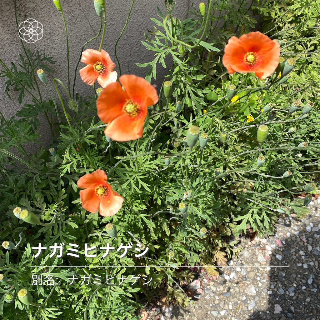 f:id:wakuwakushincha:20210501183740j:image