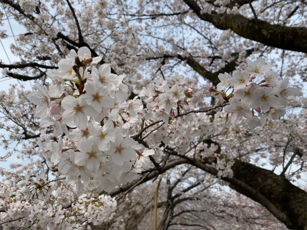 f:id:wakuwakushincha:20210505101732j:image