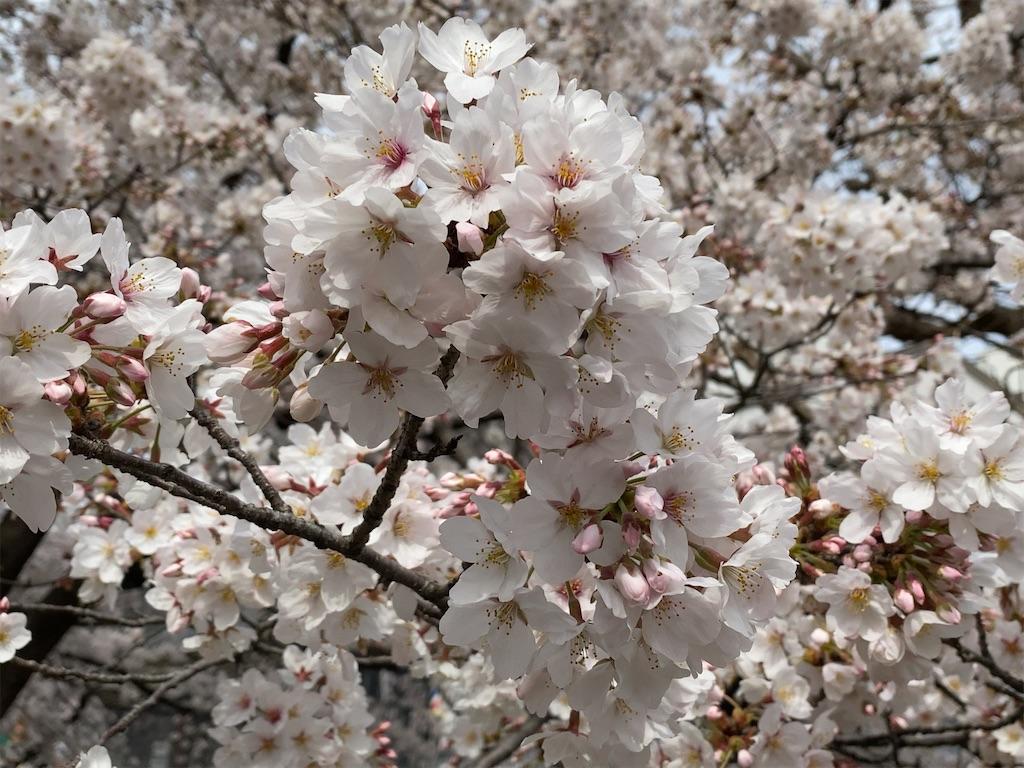 f:id:wakuwakushincha:20210505101909j:image