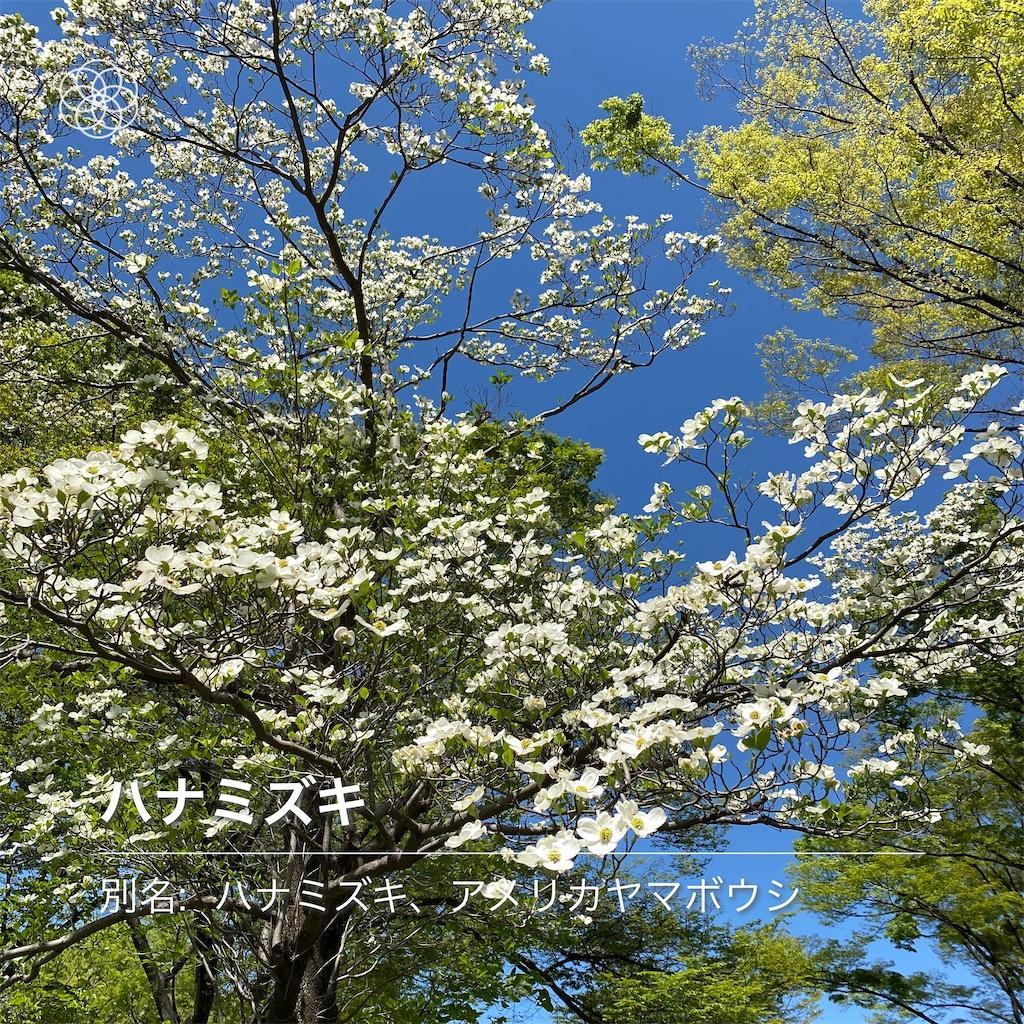 f:id:wakuwakushincha:20210505173538j:image