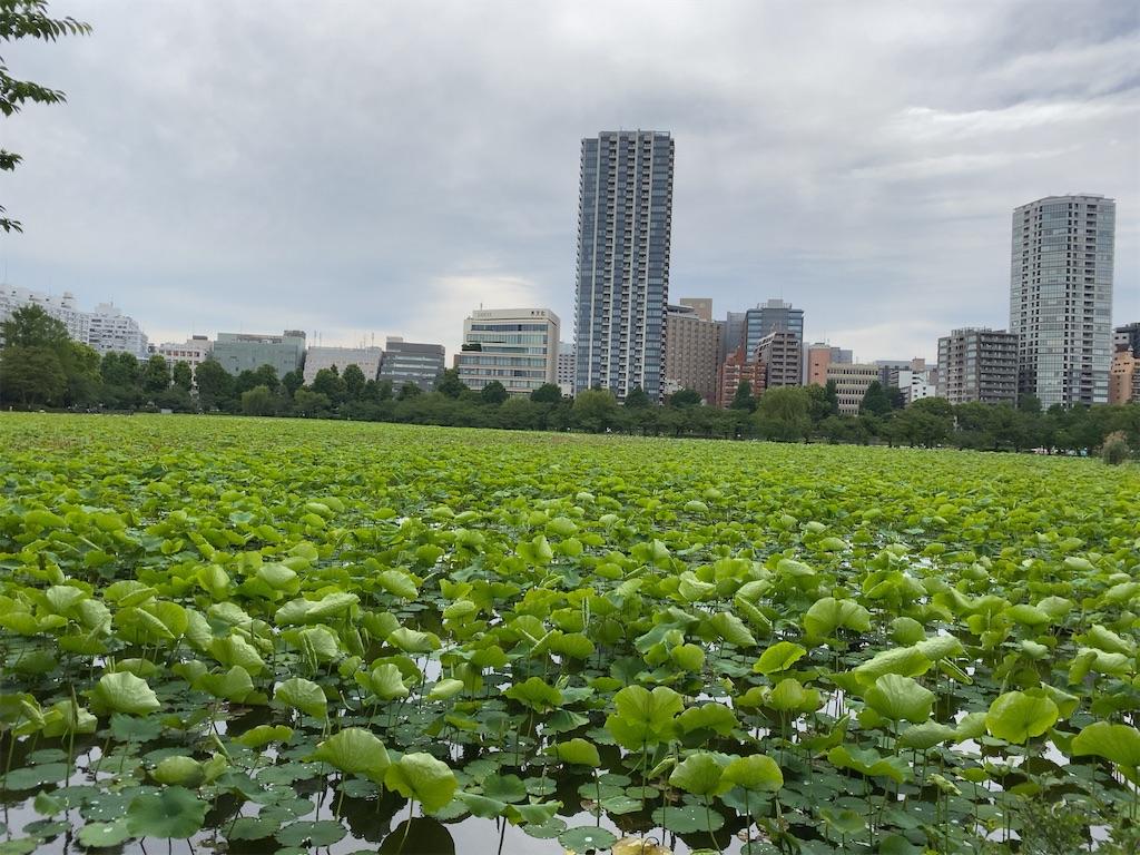f:id:wakuwakushincha:20210528204556j:image