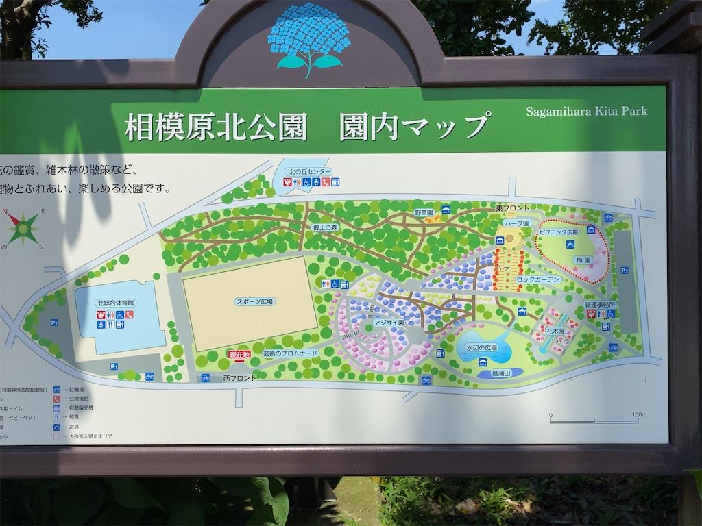 f:id:wakuwakushincha:20210609174204j:image