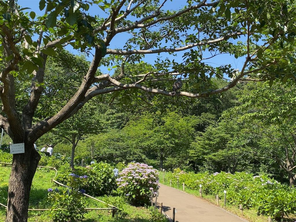 f:id:wakuwakushincha:20210609193624j:image