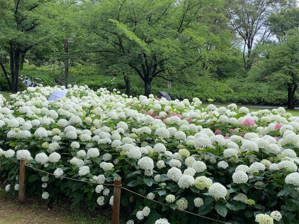 f:id:wakuwakushincha:20210622201039j:image