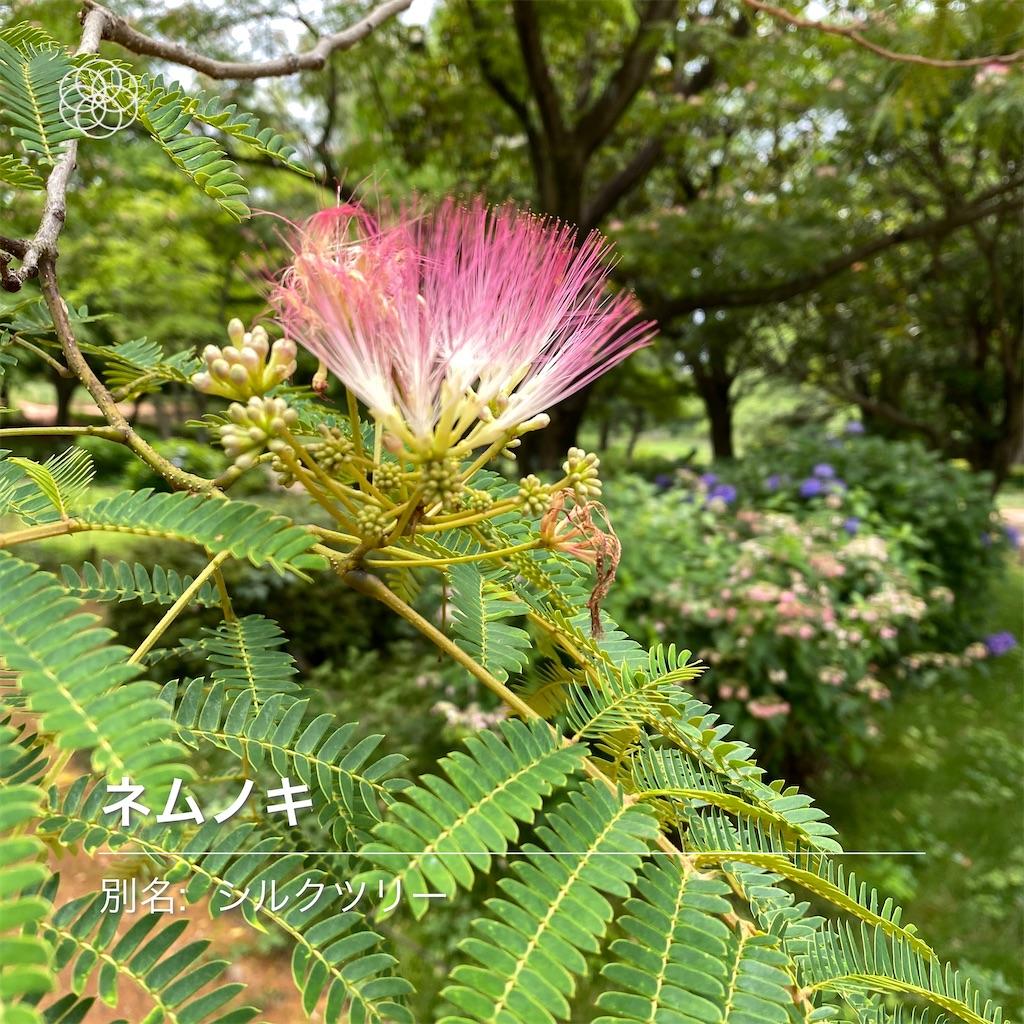 f:id:wakuwakushincha:20210630140150j:image