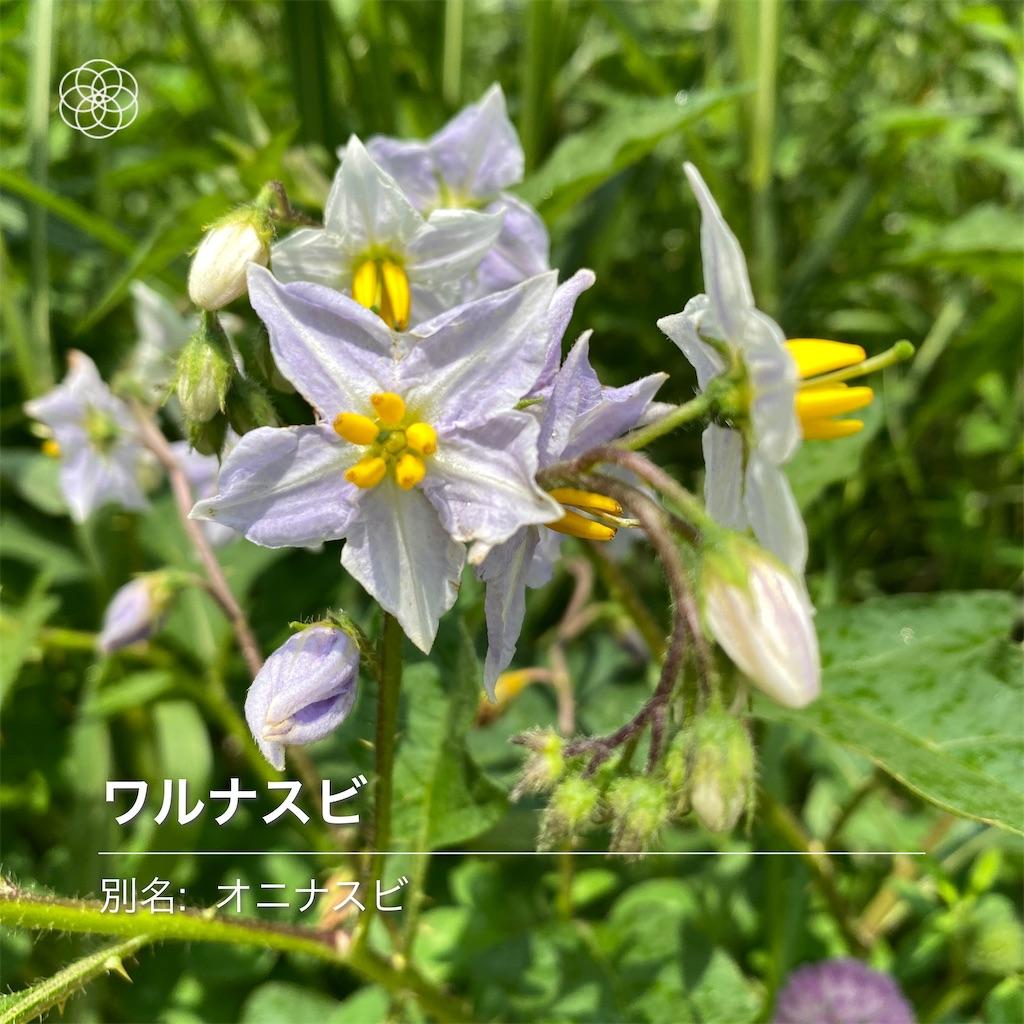 f:id:wakuwakushincha:20210630181911j:image