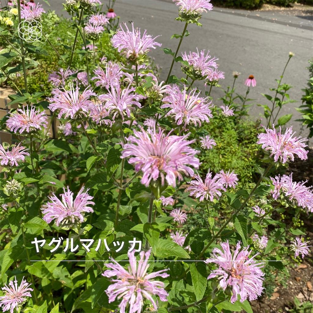 f:id:wakuwakushincha:20210630182714j:image