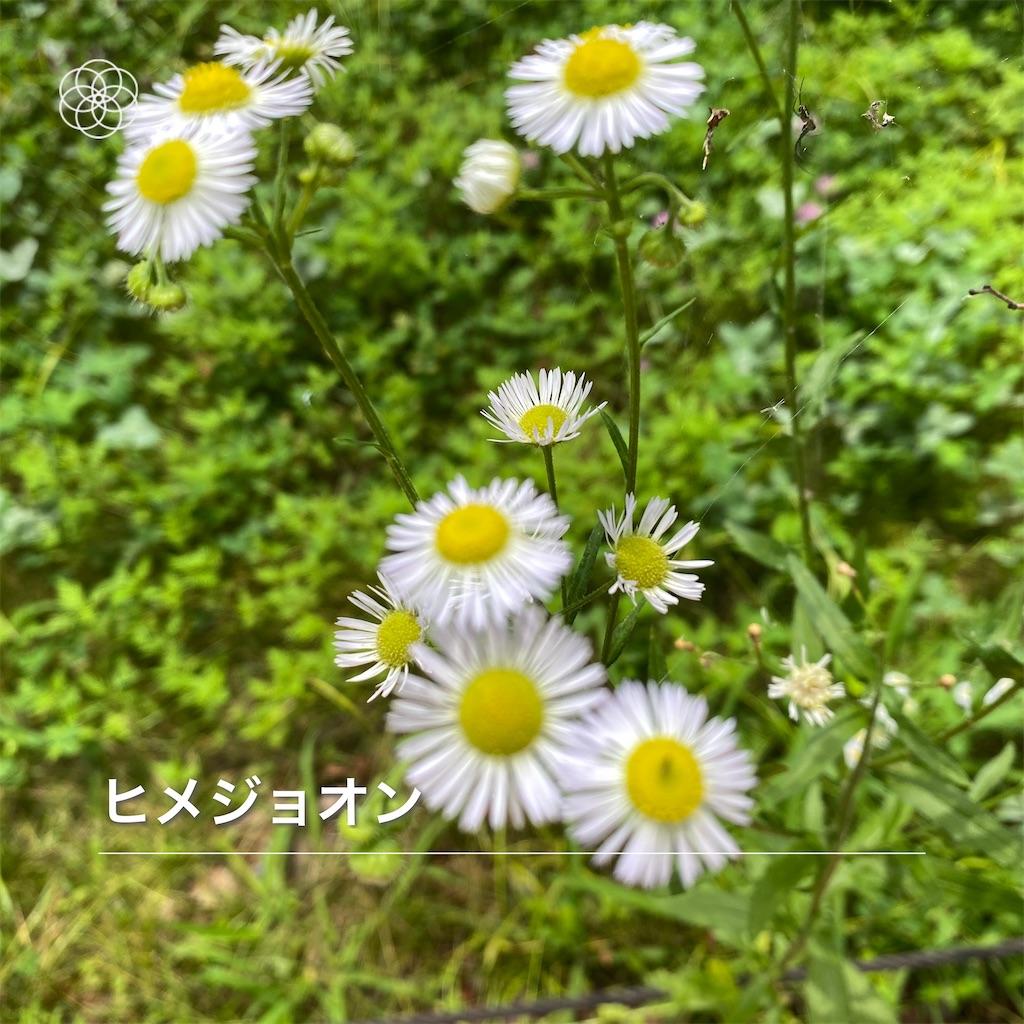 f:id:wakuwakushincha:20210630183432j:image