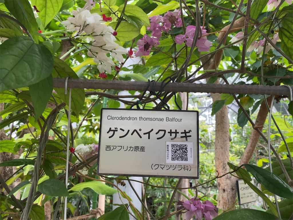 f:id:wakuwakushincha:20210704195538j:image
