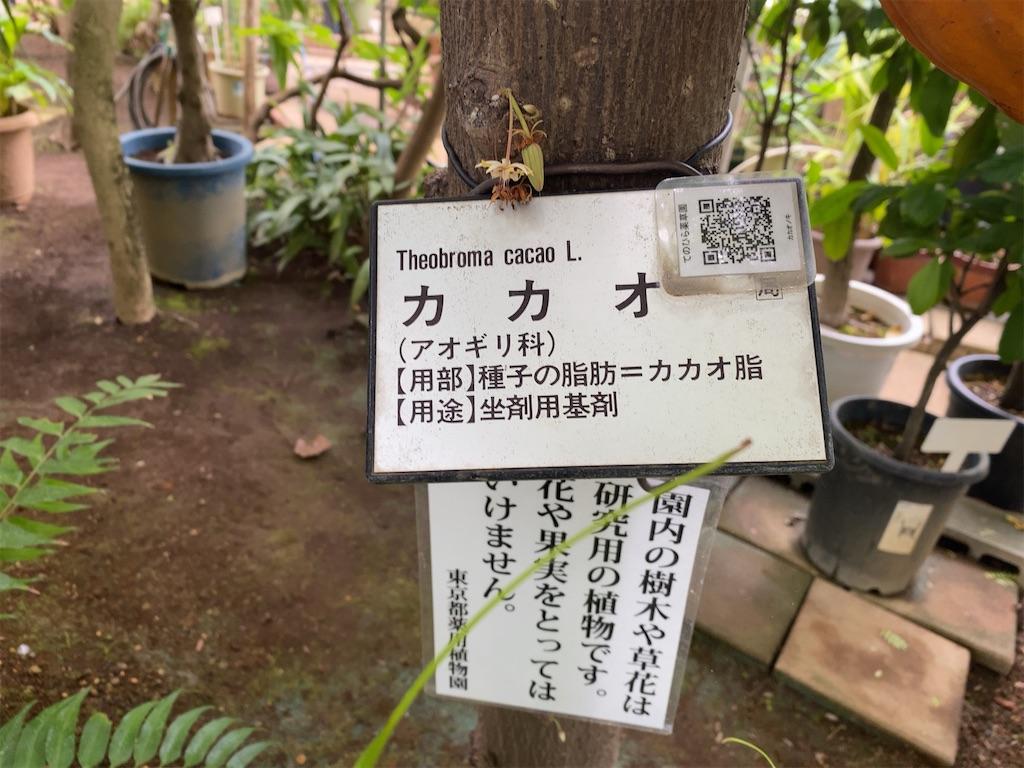 f:id:wakuwakushincha:20210704195842j:image