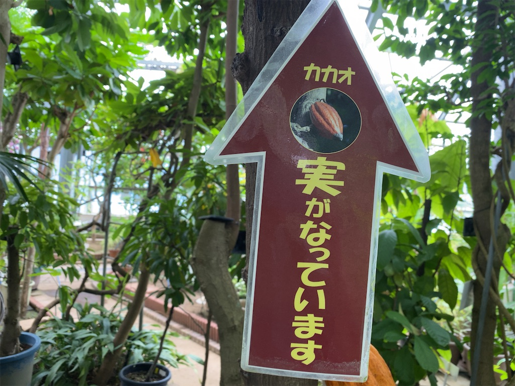 f:id:wakuwakushincha:20210704195933j:image