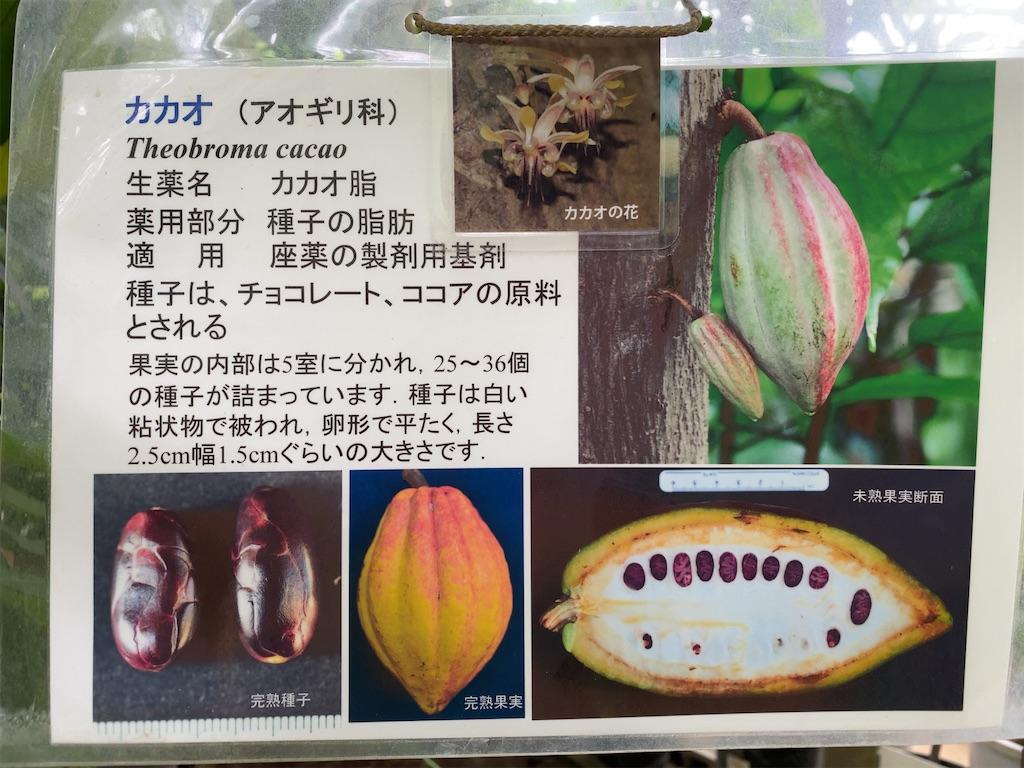 f:id:wakuwakushincha:20210704200038j:image