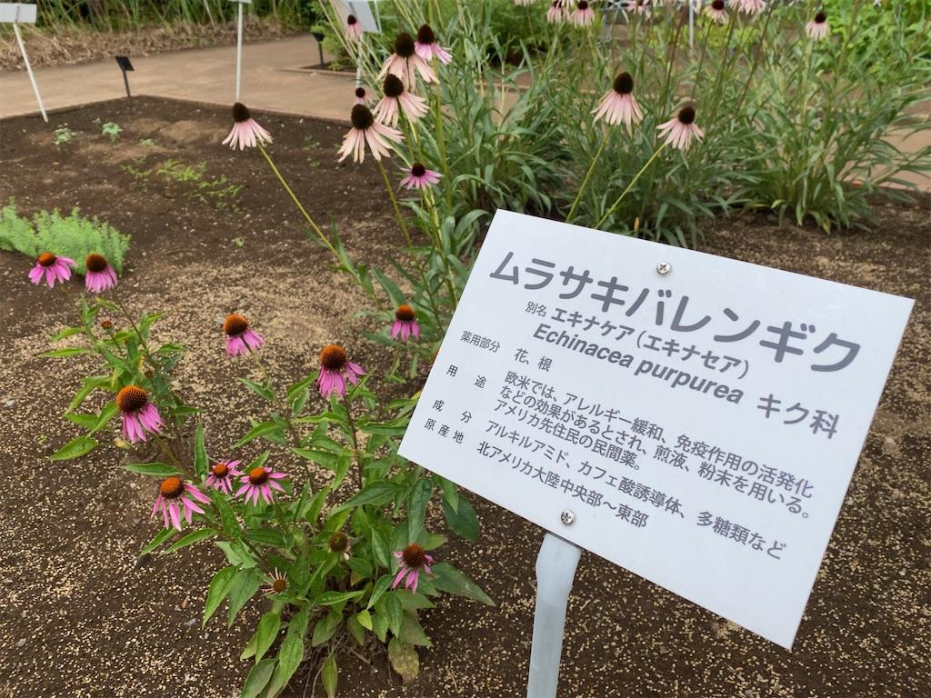 f:id:wakuwakushincha:20210704200740j:image
