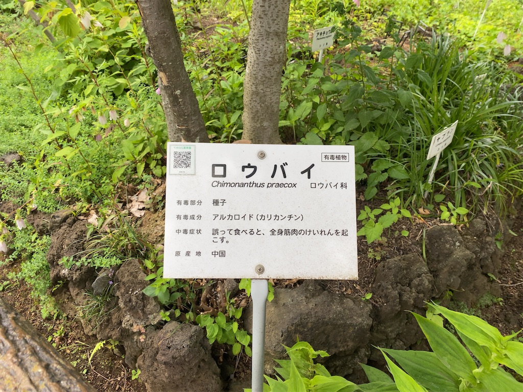 f:id:wakuwakushincha:20210704202512j:image
