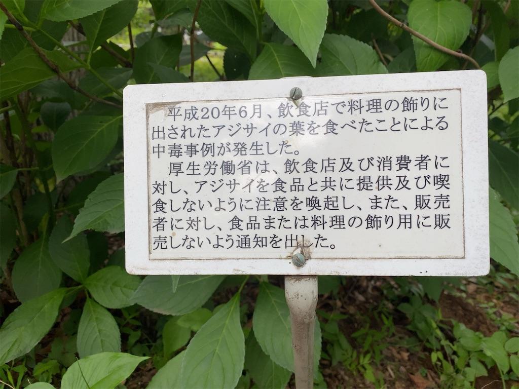 f:id:wakuwakushincha:20210704202718j:image