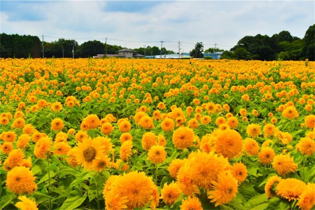 f:id:wakuwakushincha:20210721235701j:image