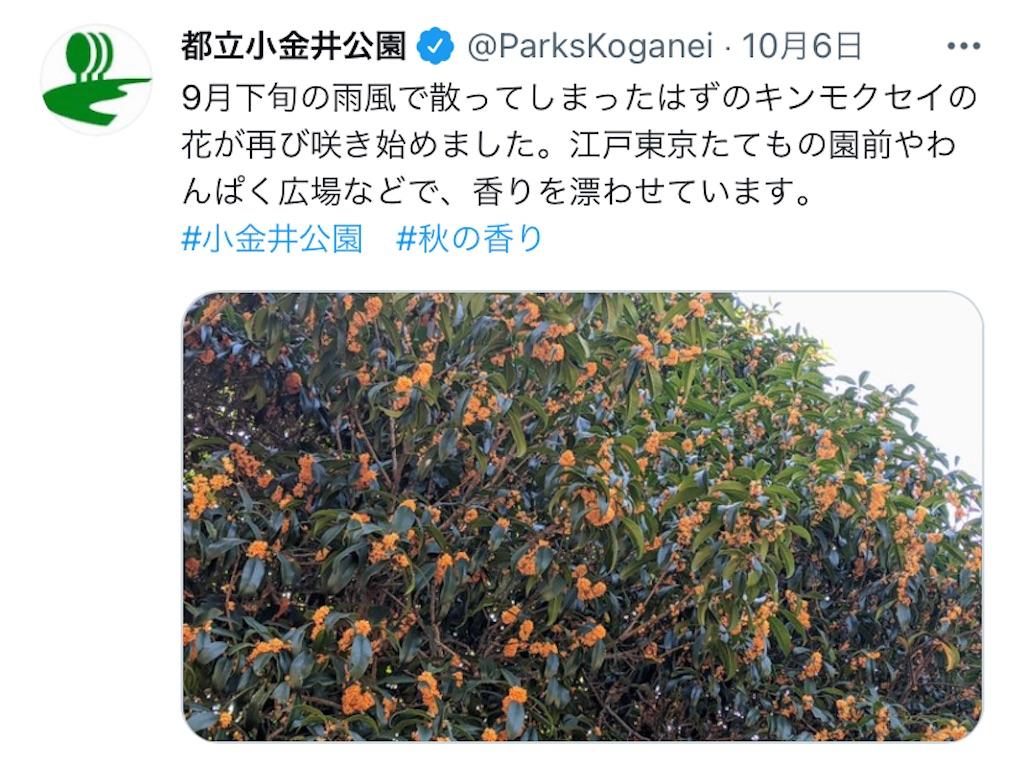 f:id:wakuwakushincha:20211008182258j:image