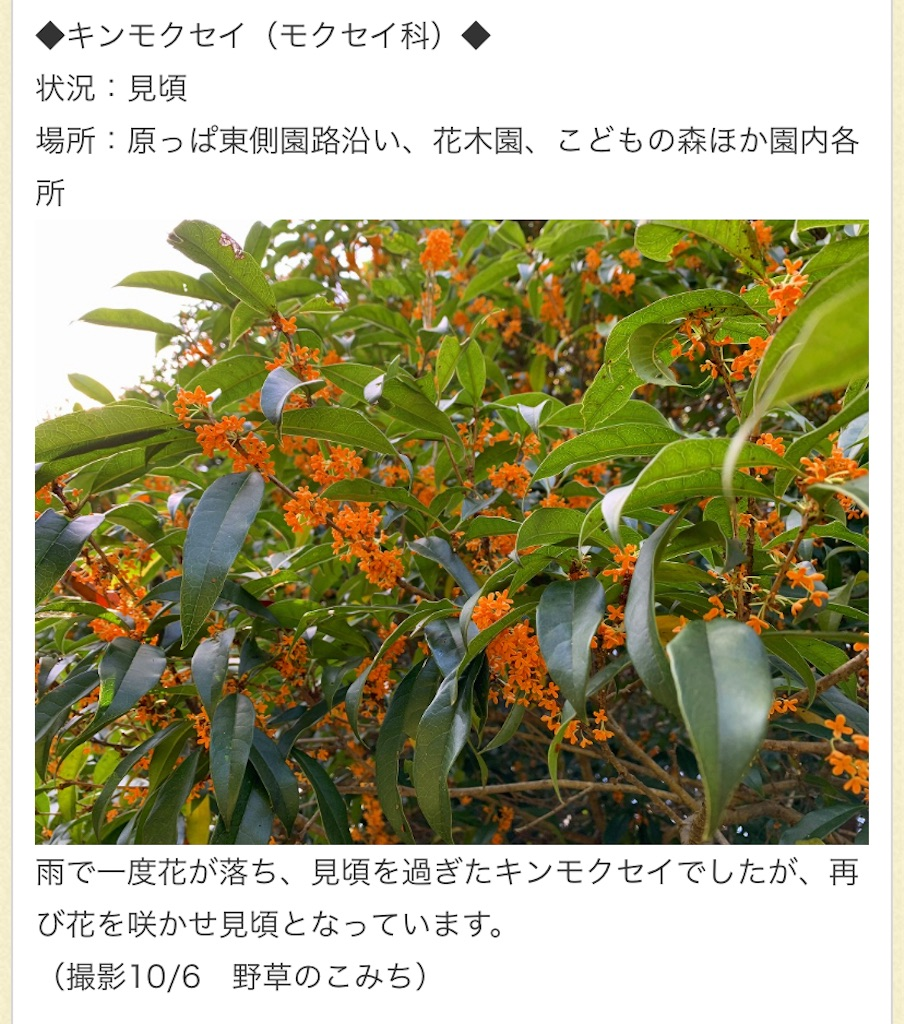 f:id:wakuwakushincha:20211008182405j:image