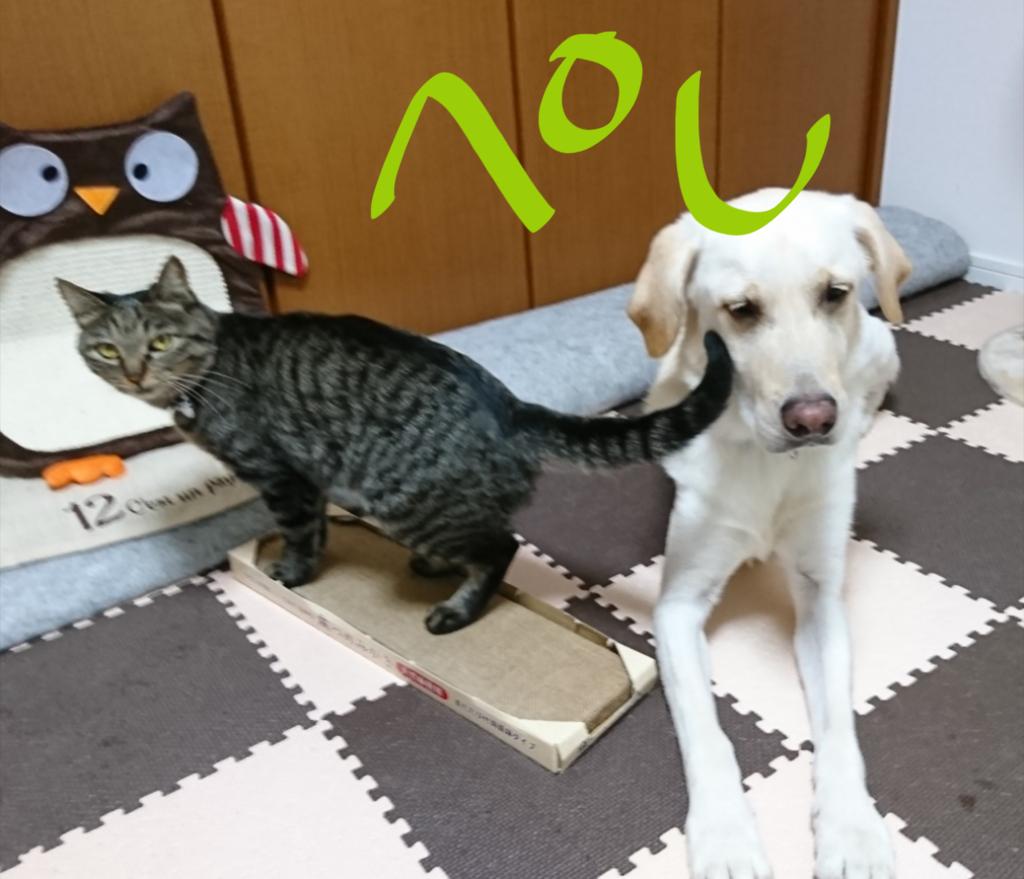 f:id:walkingakikusa:20180926231240p:plain