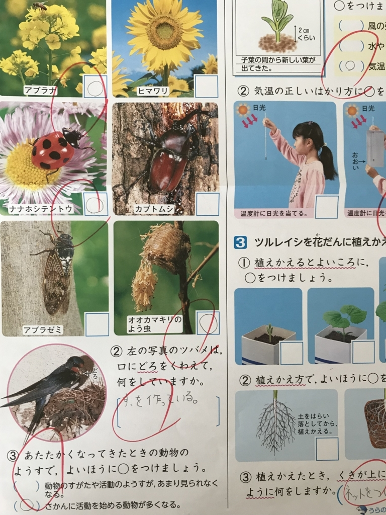 f:id:wamama-mikata:20180525125710j:plain