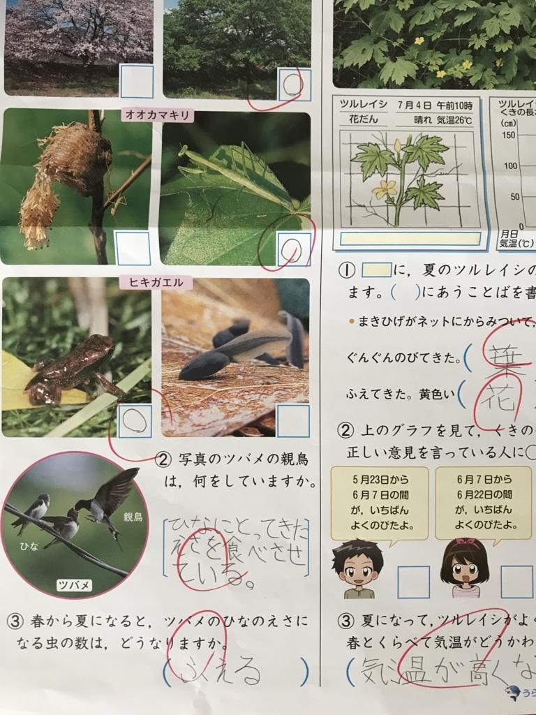 f:id:wamama-mikata:20180726092503j:plain
