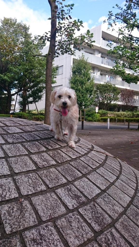 f:id:wanko-daisuki:20161018153305j:plain
