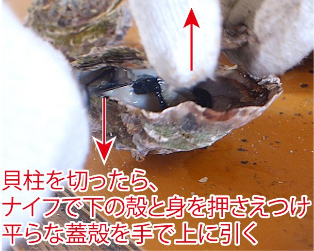 f:id:wanko515:20170316125542j:plain