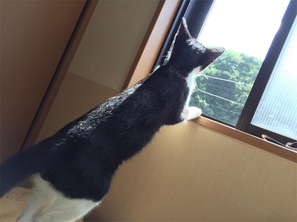 f:id:wanomichi68:20170919075839j:image