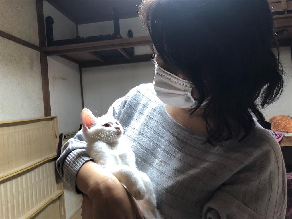f:id:wanomichi68:20181026202921j:image