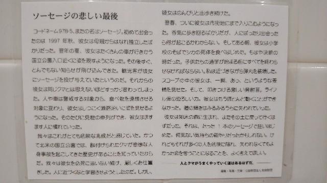 f:id:wanpaku-yaseiji:20191127005631j:image