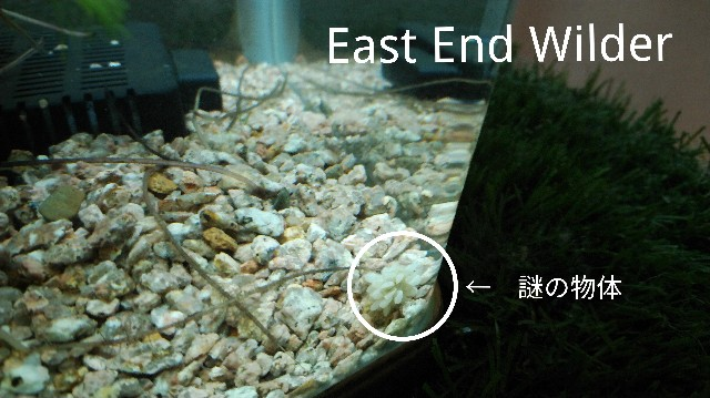 f:id:wanpaku-yaseiji:20191204221641j:image