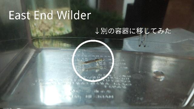 f:id:wanpaku-yaseiji:20191204221723j:image