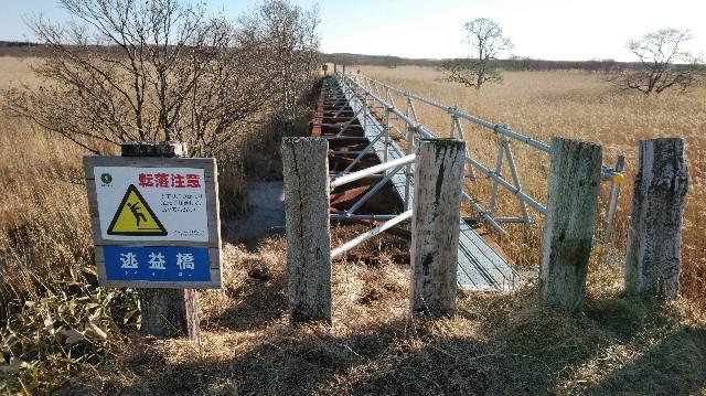 f:id:wanpaku-yaseiji:20200104234238j:image
