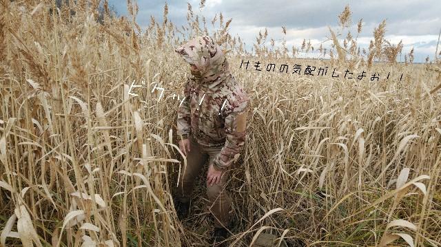 f:id:wanpaku-yaseiji:20201120180717j:image
