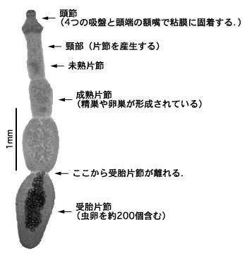 f:id:wanpaku-yaseiji:20201126221055j:image