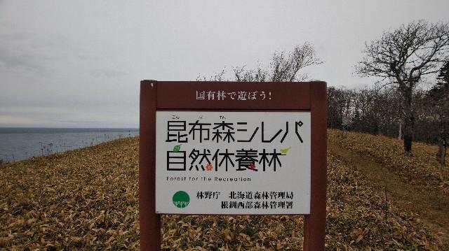 f:id:wanpaku-yaseiji:20201207123055j:image