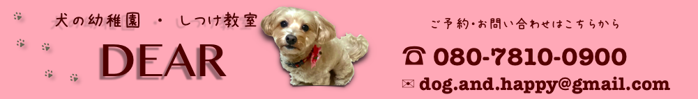 犬の幼稚園・しつけ方教室DEAR