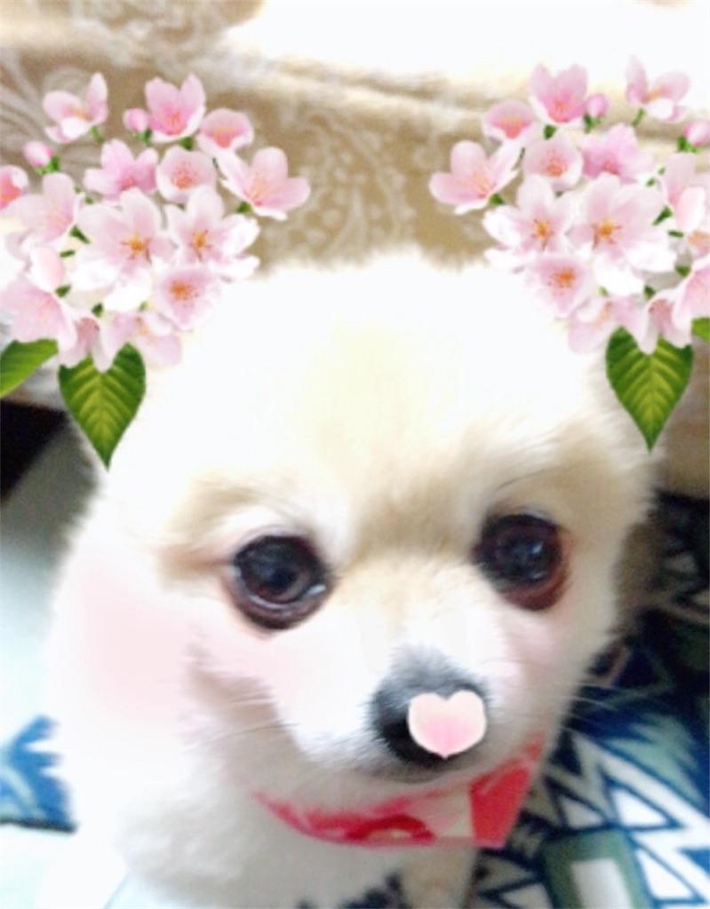 f:id:wanwanclub:20170419225752j:image