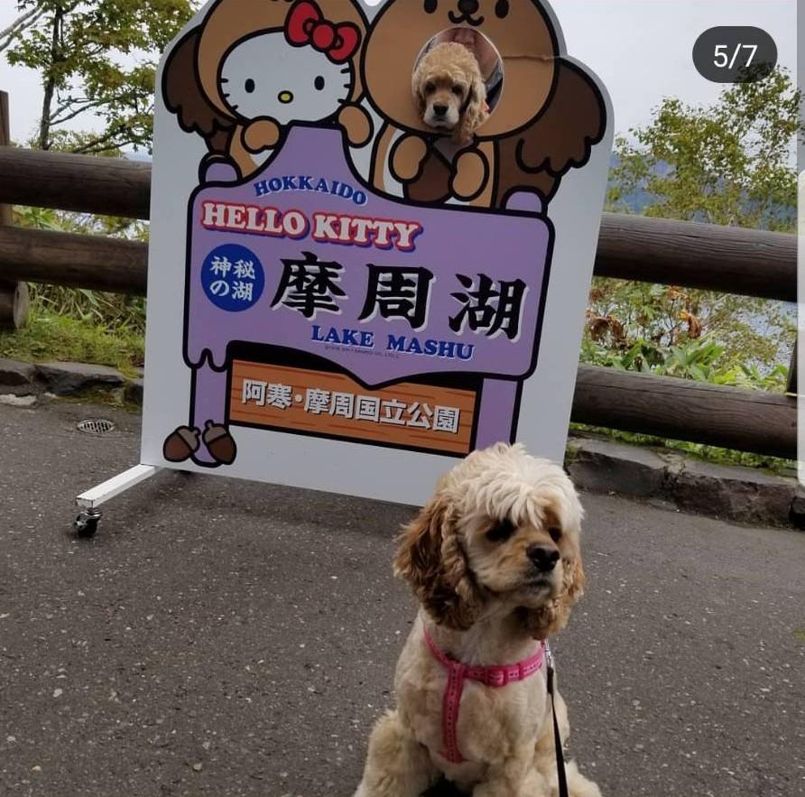 f:id:wanwankazoku:20190526205346j:plain