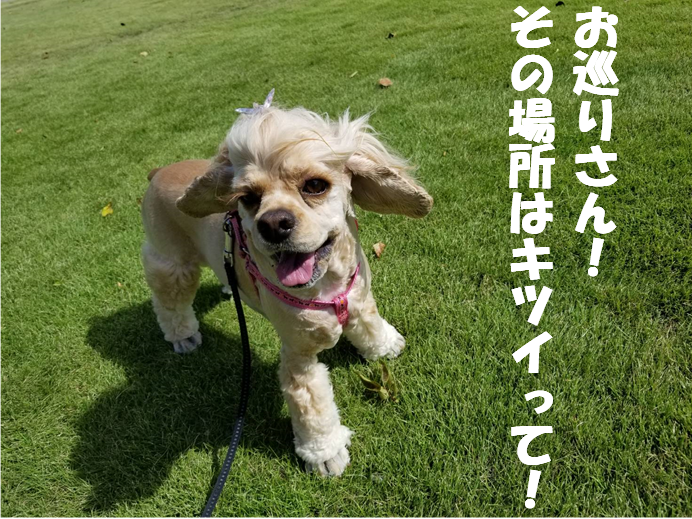 f:id:wanwankazoku:20190923210427p:plain