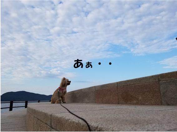 f:id:wanwankazoku:20190927000123p:plain